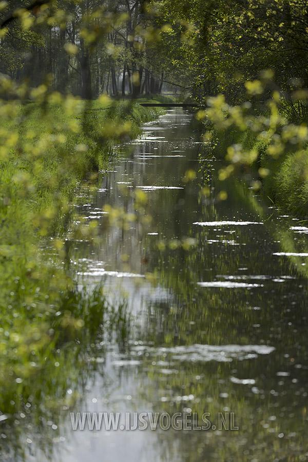 Ooit een slingerende beek, nu een snel afwaterende watergang.