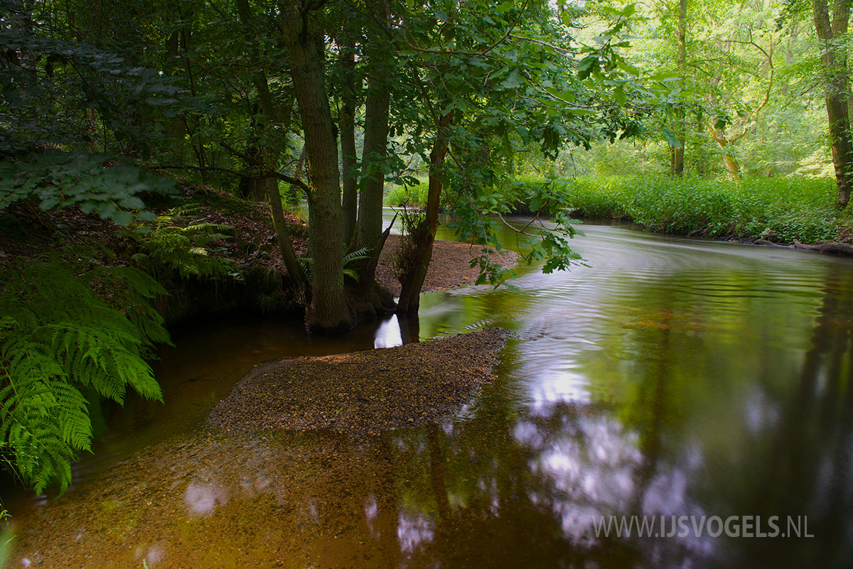 IJsvogels.nl_ALC0401