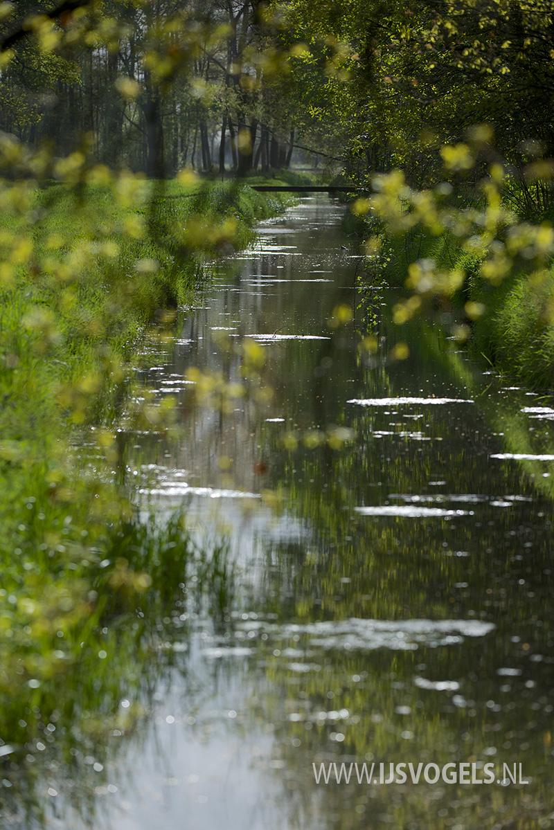 IJsvogels.nl_ALC3669