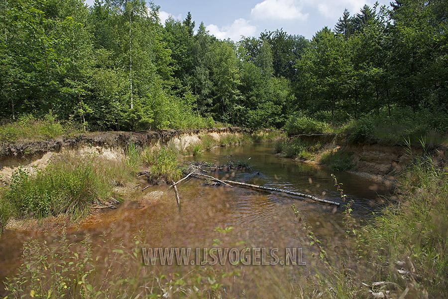Een nieuwe meander in de rivier De Swalm.