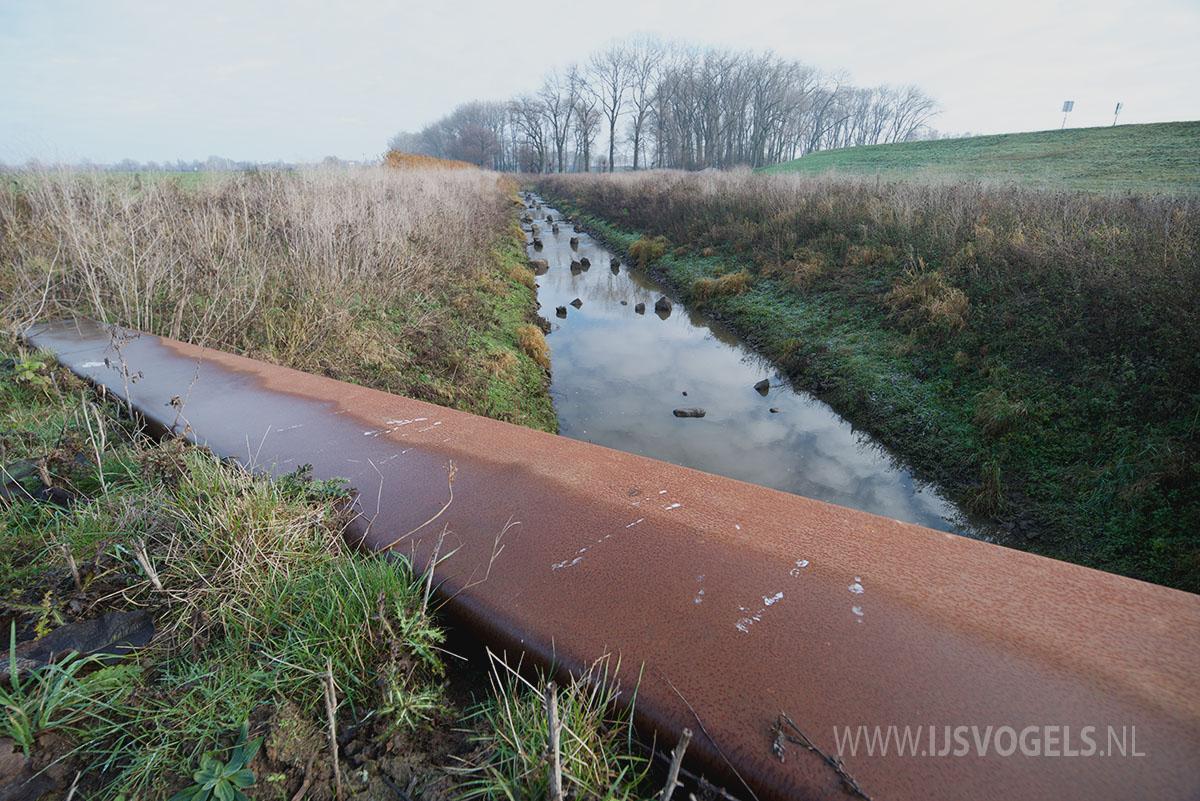 IJsvogels.nl_ALC4834