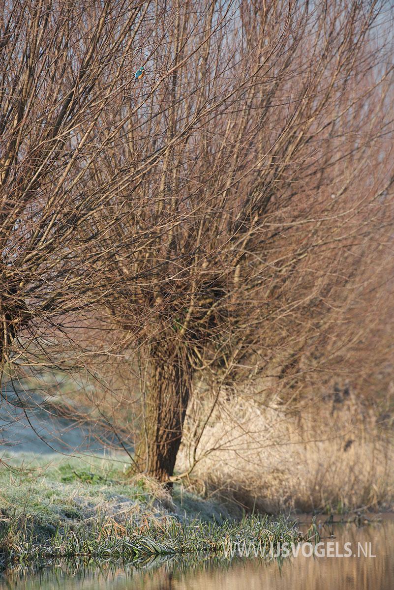 IJsvogels.nl_ALC9737